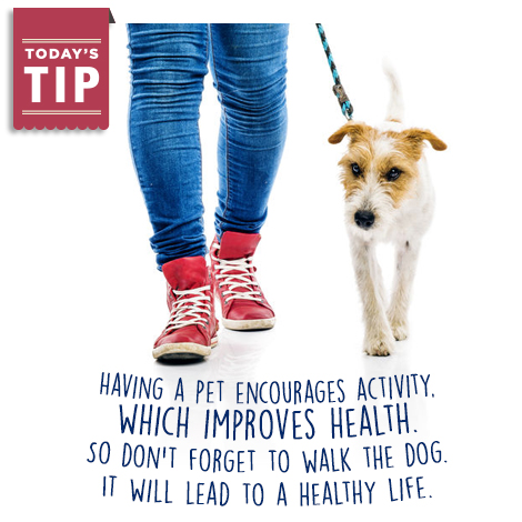 Walking the dog promotes health